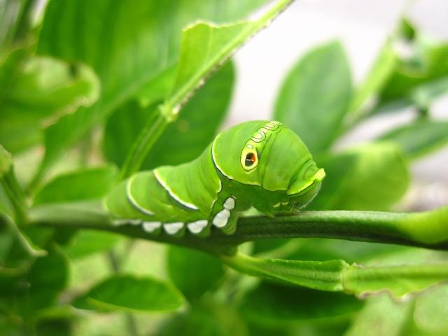 「寄生虫人生」を考える、私は寄生虫になることを勧める(仕事編)